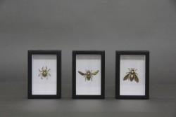 3er-Set Bilder Insekten